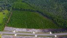 Dixon Farms - Lot 7 - Nassau County, Florida