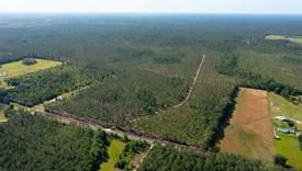 New River Pines - Bradford County, Florida