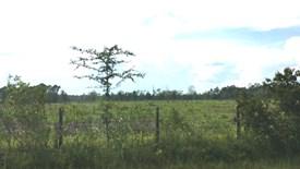 Cobb Creek Parcel 2 - Baker County, Florida