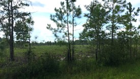 Cobb Creek Parcel 3 - Baker County, Florida