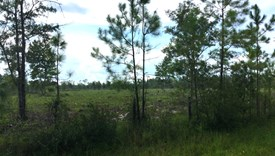 Cobb Creek Parcel 3 - Baker County, Florida
