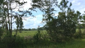 Cobb Creek Parcel 4 - Baker County, Florida