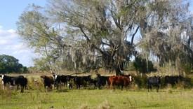 Meng Dairy Farms Parcel 8 - Bradford County, Florida