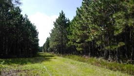 Powell Ranches - Bradford County, Florida