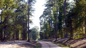 Star Ridge Parcel 4 - Polk County, Texas