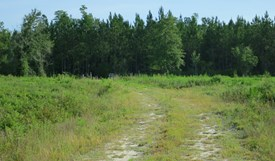 Tall Pines Parcel 12 - Bradford County, Florida