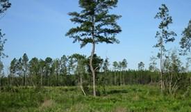 Tall Pines Parcel 13 - Bradford County, Florida