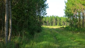 Tall Pines Parcel 1 - Bradford County, Florida
