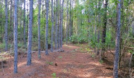 Tall Pines Parcel 2 - Bradford County, Florida