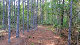 Tall Pines Parcel 2 - Bradford County, Florida
