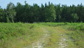 Tall Pines Parcel 4 - Bradford County, Florida