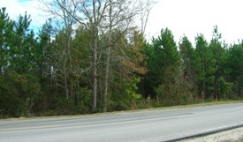 Tall Pines Parcel 6 - Bradford County, Florida
