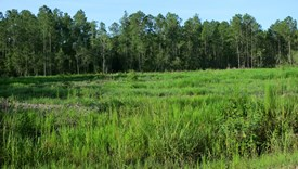 Tall Pines Parcel 10 - Bradford County, Florida
