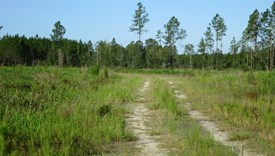 Tall Pines Parcel 11 - Bradford County, Florida