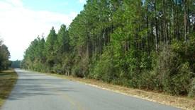 Crosby Lake Parcel 2 - Bradford County, Florida