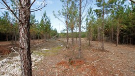 River Bend Lot 9 - Allen Parish, Louisiana