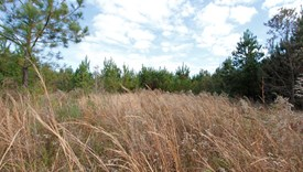 River Bend Lot 1 - Allen Parish, Louisiana