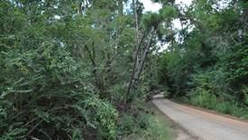 Livingston South-Parcel 2 - Polk County, Texas