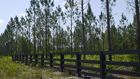 McCully Forest - Block B - Lot 1  - Nassau County, Florida