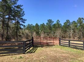 Southern Star - Lot 3 - Polk County, Texas