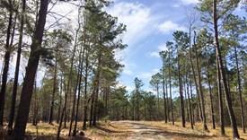Southern Star - Lot 6 - Polk County, Texas