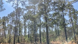 County Line Farms - Lot 9 - Polk County, Texas