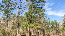 County Line Farms - Lot 10 - Polk County, Texas