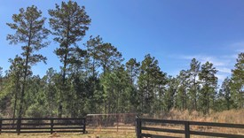 County Line Farms - Lot 2 - Polk County, Texas