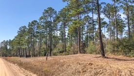 County Line Farms - Lot 3 - Polk County, Texas